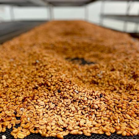 Savage Coffees - Panama Apex Blend Filter