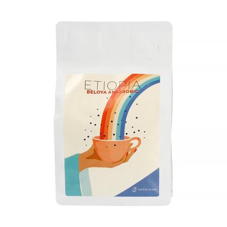 COFFEE PLANT - Ethiopia Beloya Anaerobic Filter