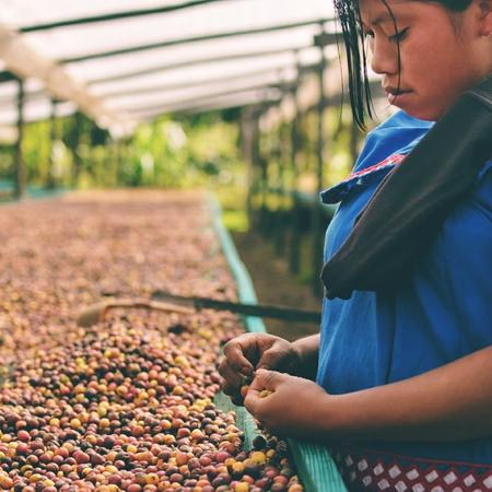 Audun Coffee - Panama Finca Hartmann Geisha 125g
